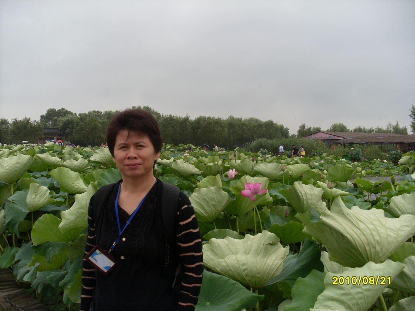雨中畅游白洋淀_图1-14