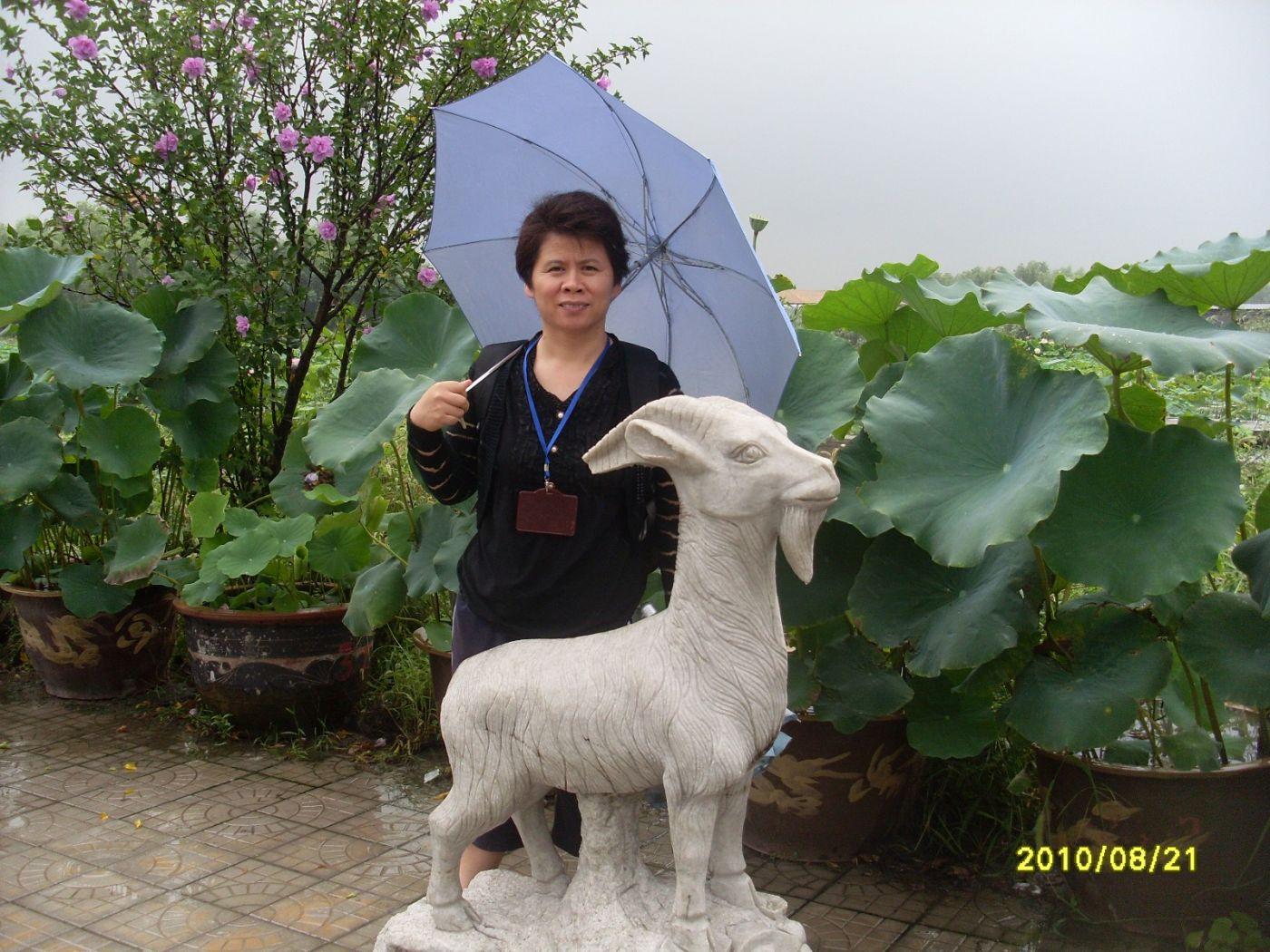 雨中畅游白洋淀_图1-19