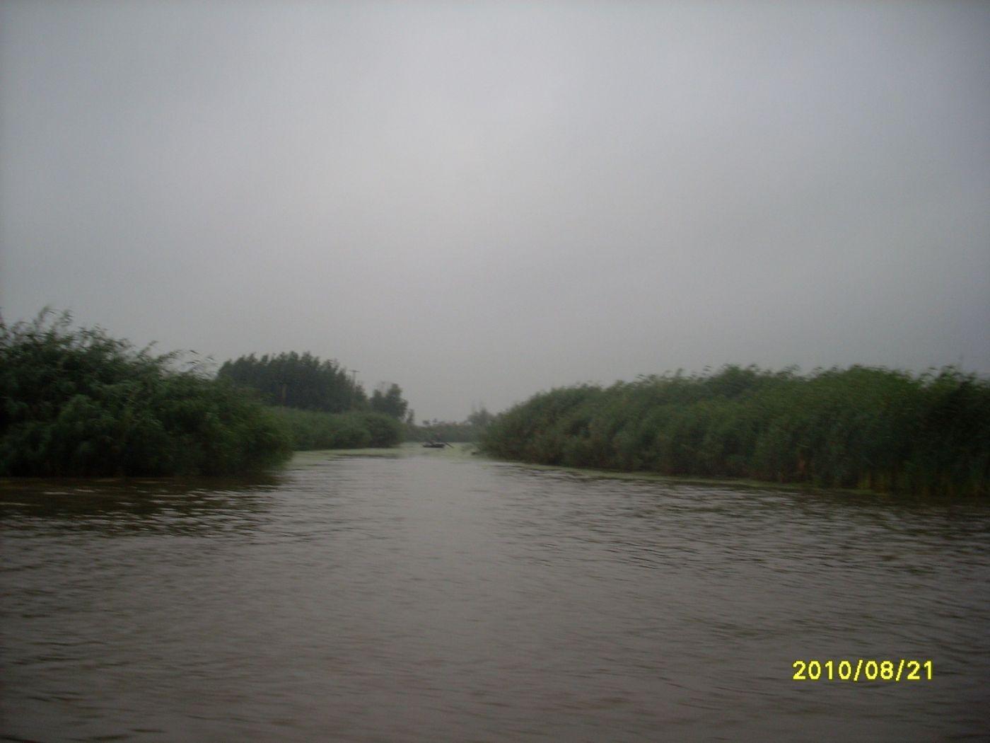 雨中畅游白洋淀_图1-23