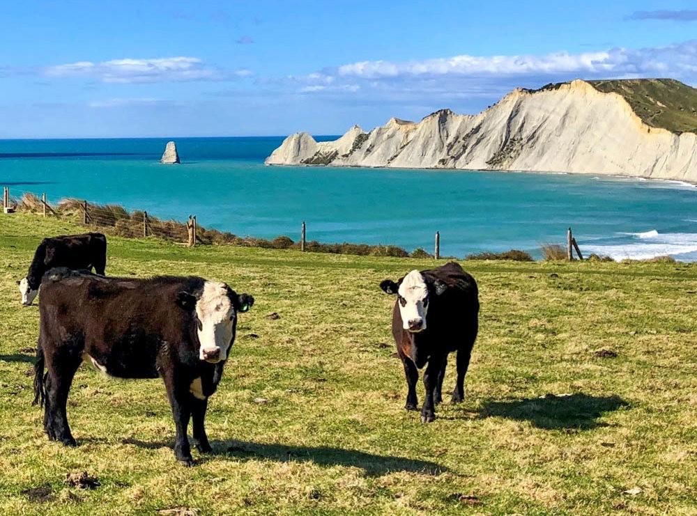 新西兰北岛与南岛行--2_图1-2