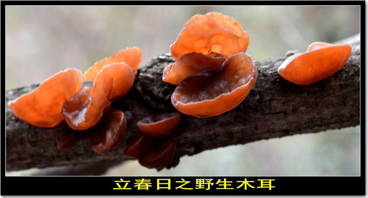立春记(古典诗词)_图1-3