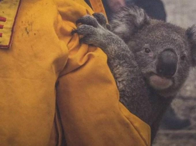 燃烧了近七个月的澳洲大火为何突然灭了?原因是什么?老天爷第一功 ..._图1-2