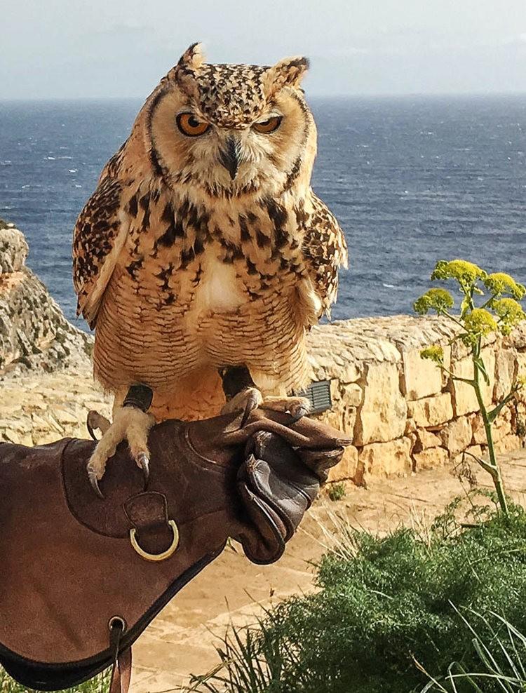 探索马耳他---地中海的瑰宝_图1-30