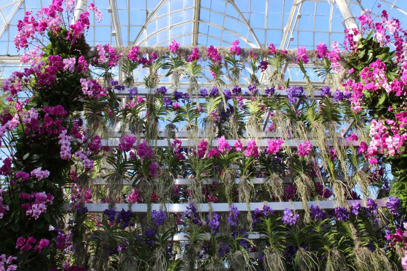 纽约植物园兰花展_图1-2
