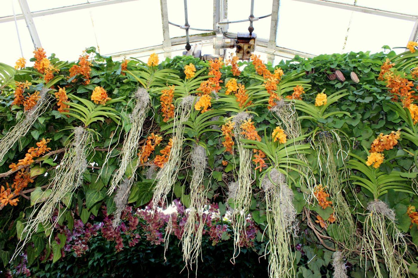 纽约植物园兰花展_图1-29