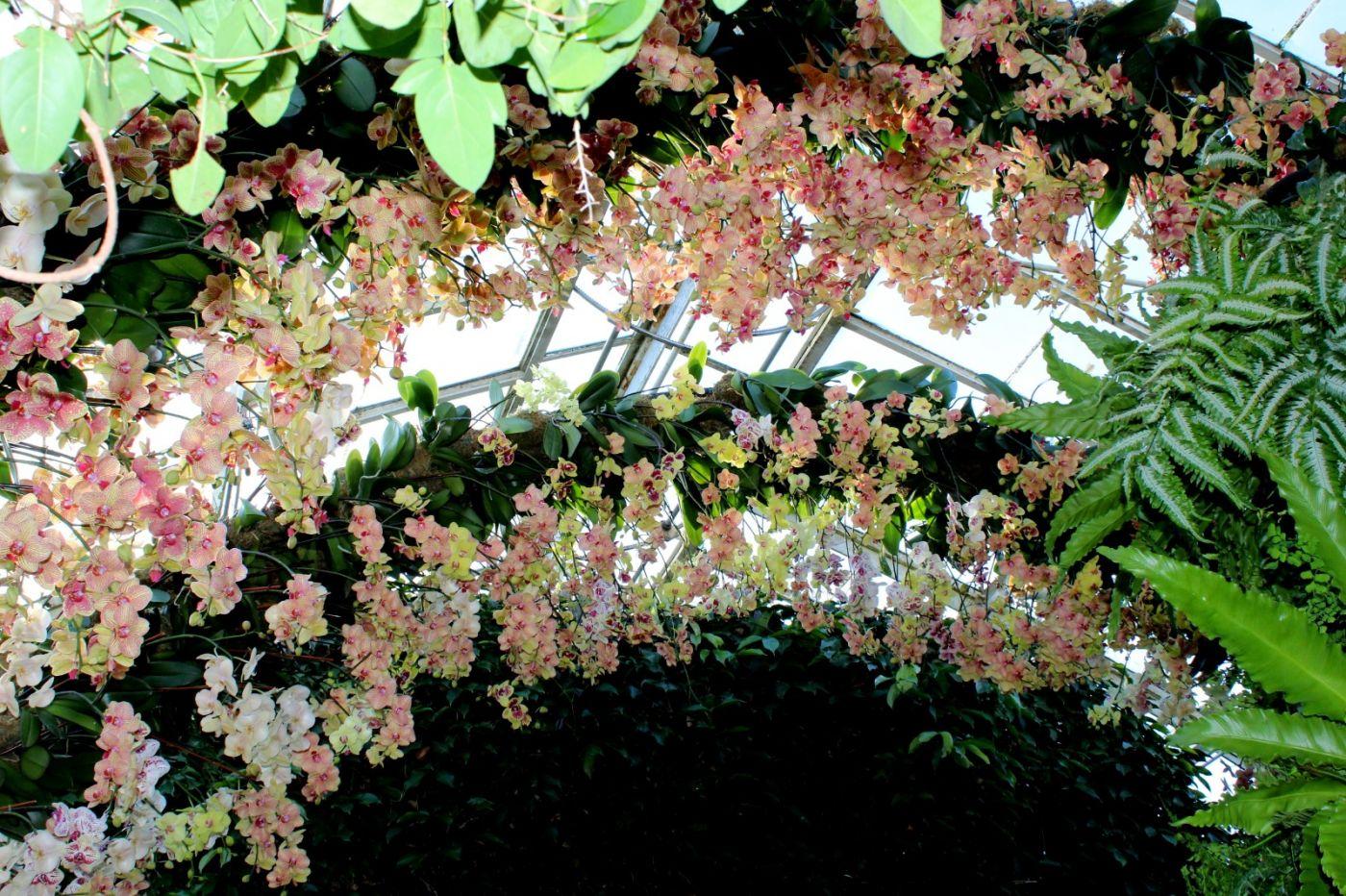 纽约植物园兰花展_图1-34