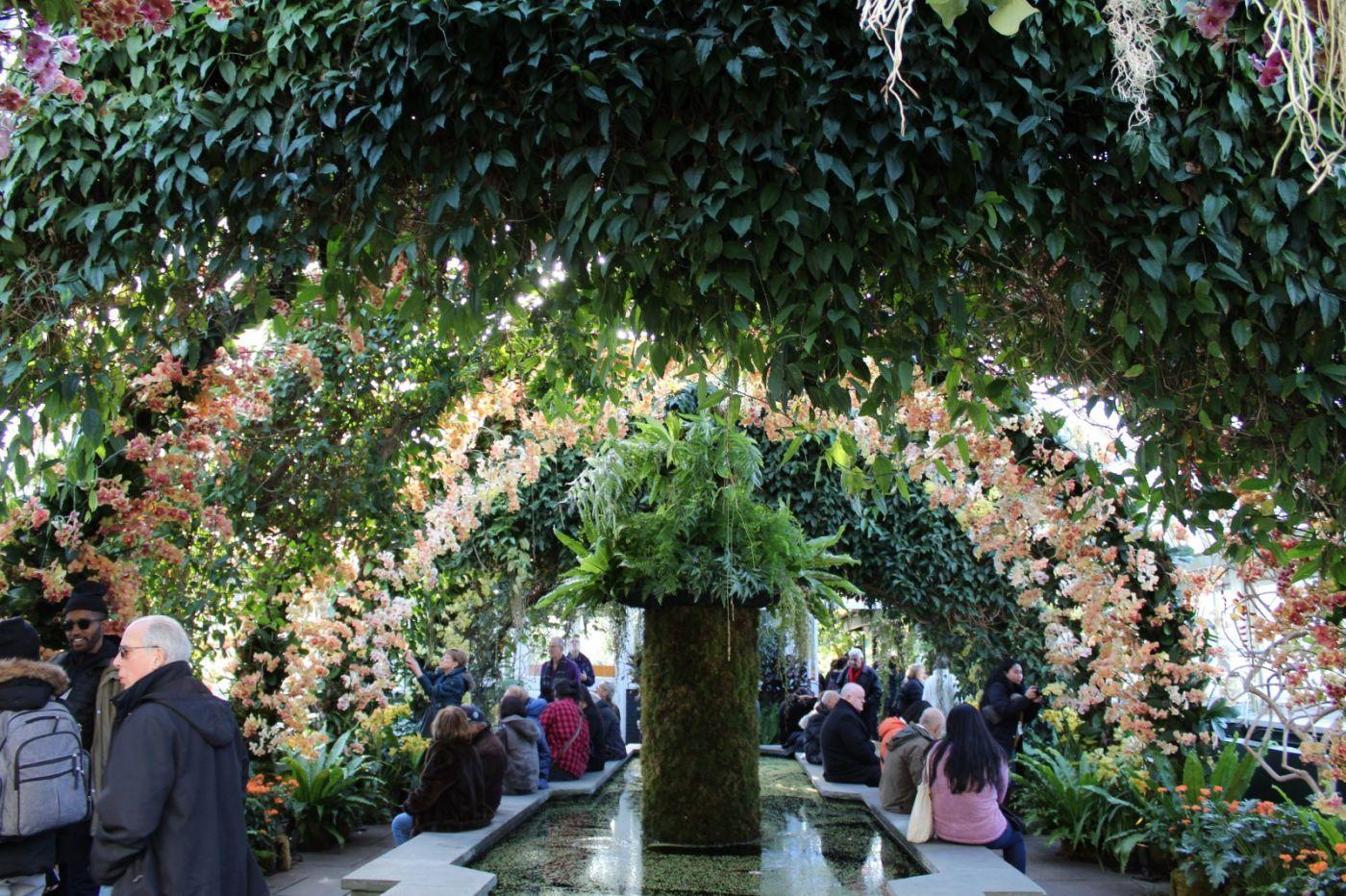 纽约植物园兰花展_图1-37