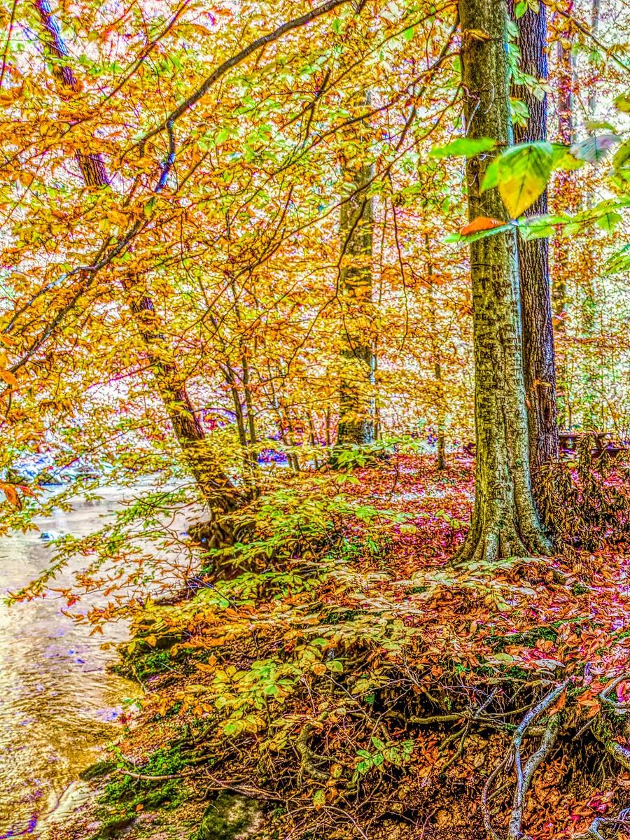 賓州雷德利克里克公園(Ridley creek park),金色的季節_圖1-17