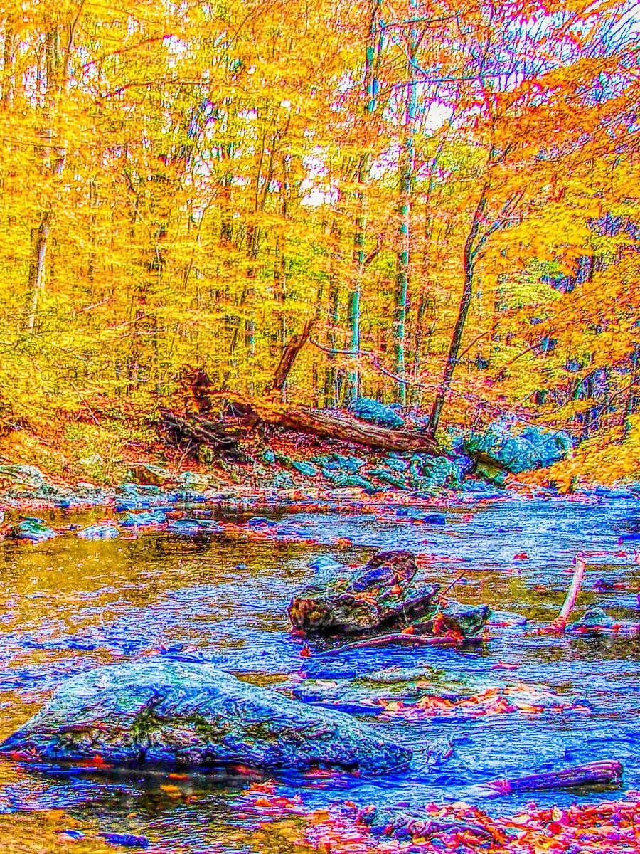 賓州雷德利克里克公園(Ridley creek park),金色的季節_圖1-19