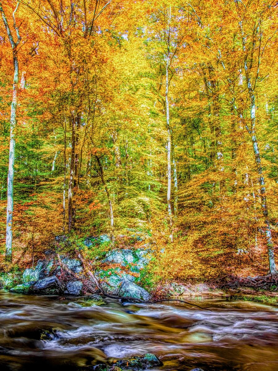 賓州雷德利克里克公園(Ridley creek park),金色的季節_圖1-18