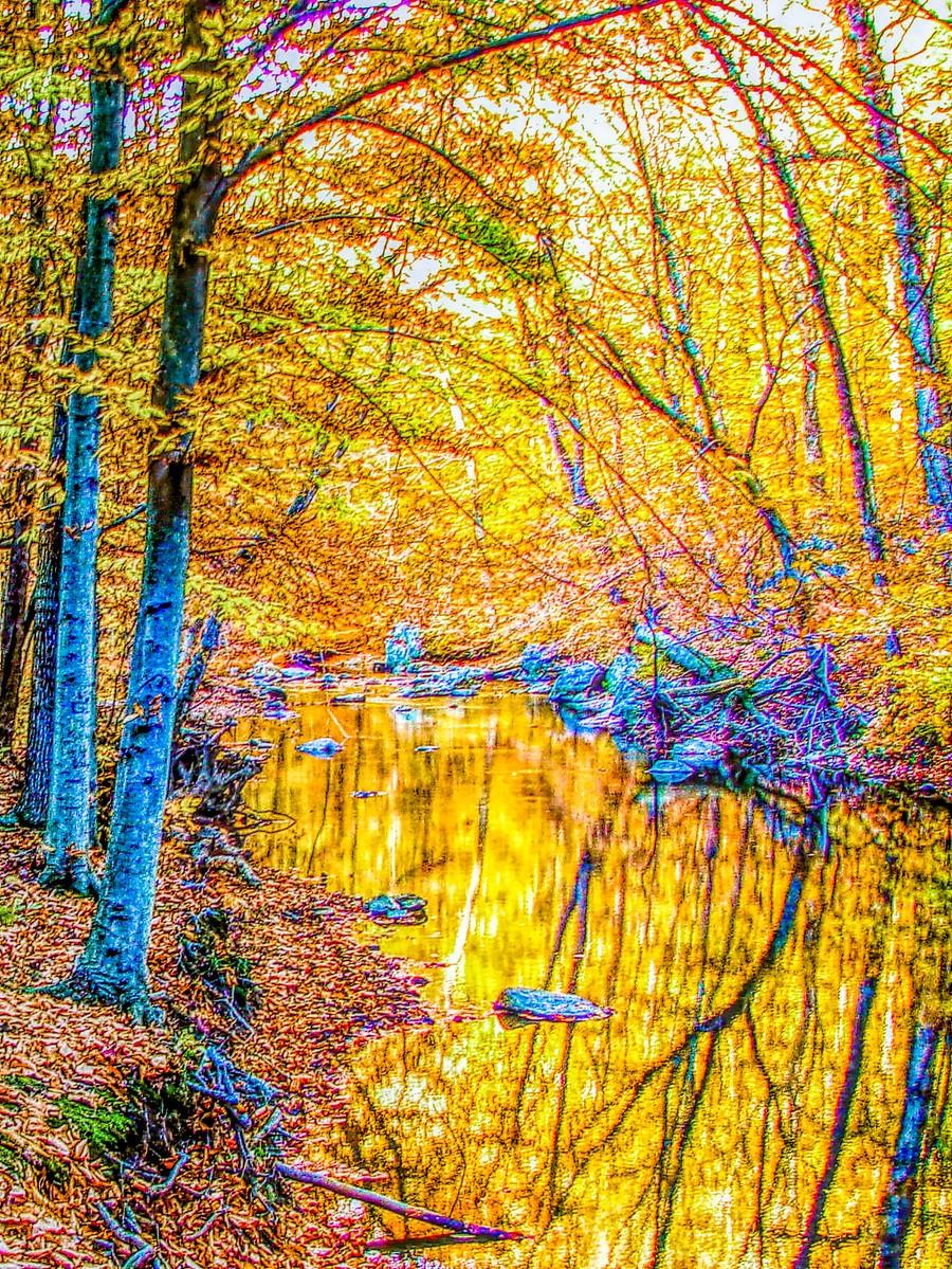 賓州雷德利克里克公園(Ridley creek park),金色的季節_圖1-16