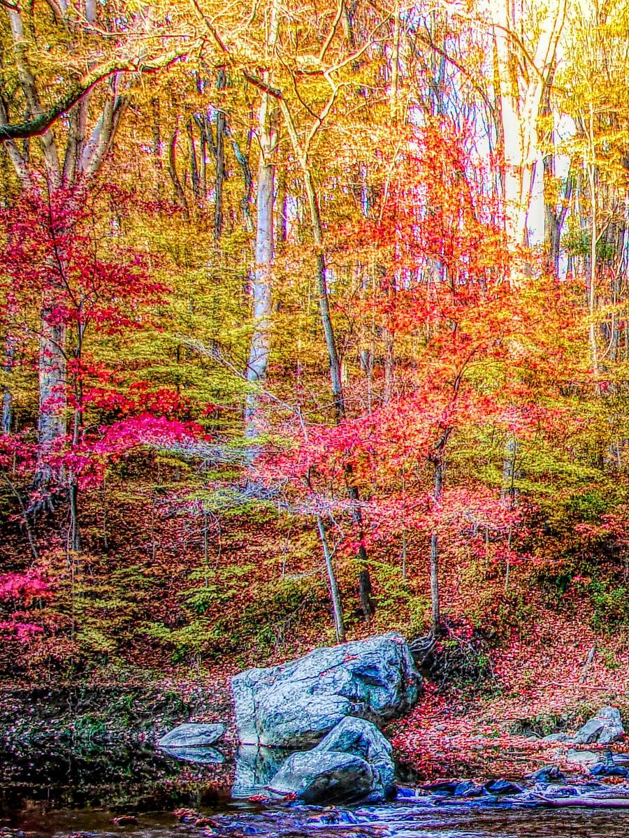 賓州雷德利克里克公園(Ridley creek park),金色的季節_圖1-14