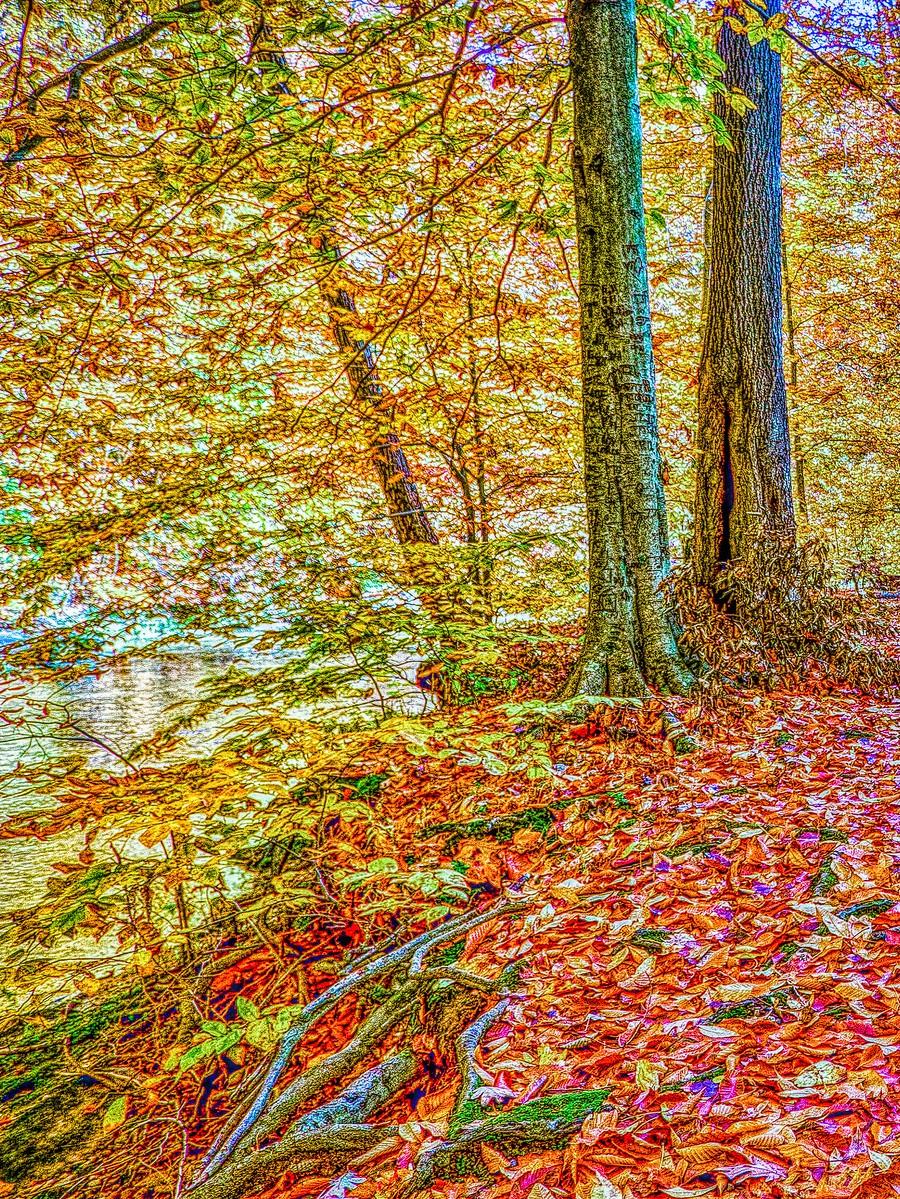賓州雷德利克里克公園(Ridley creek park),金色的季節_圖1-13