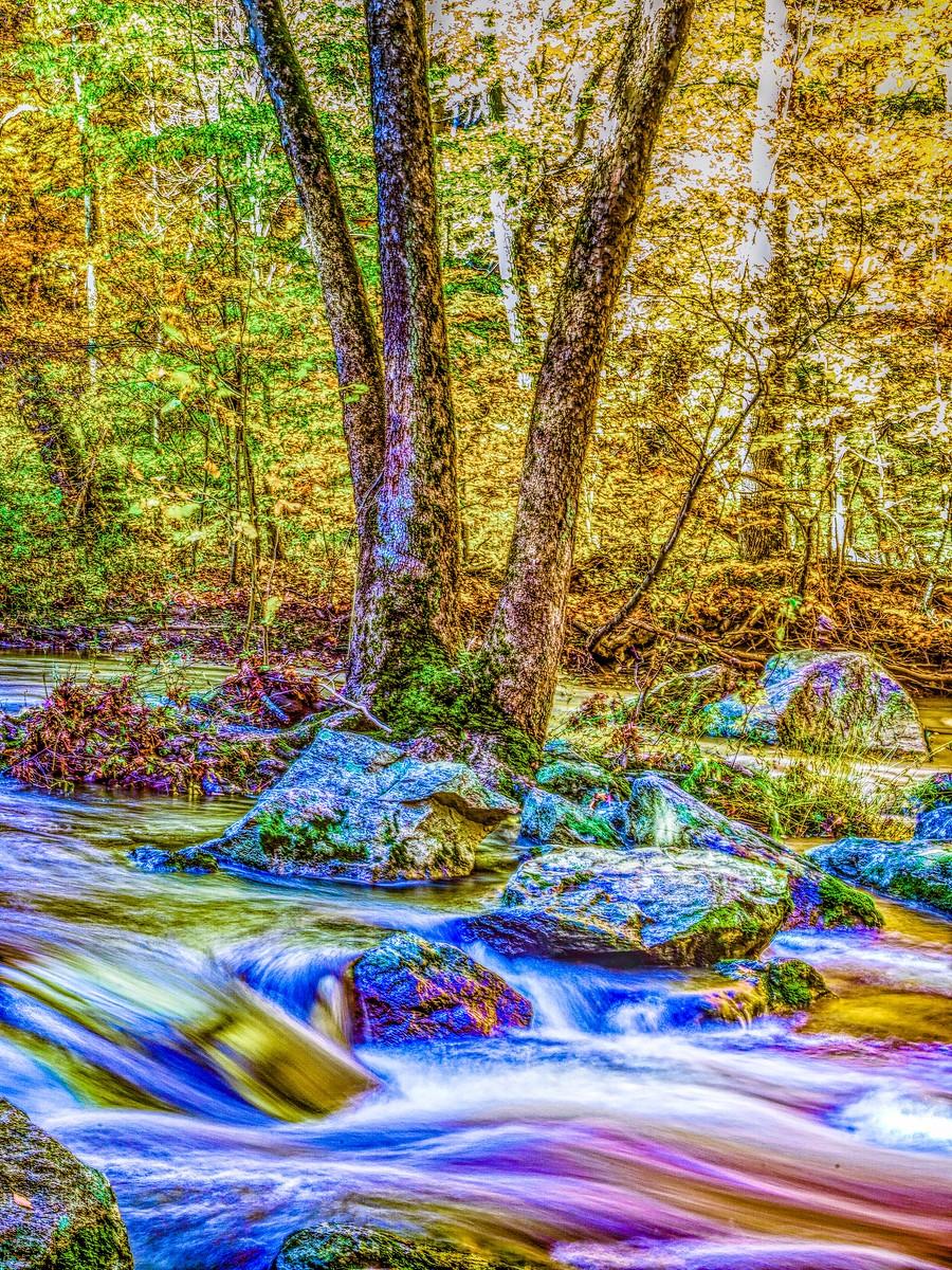 賓州雷德利克里克公園(Ridley creek park),金色的季節_圖1-15