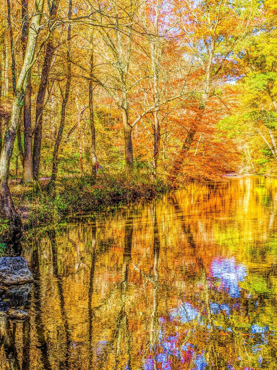 賓州雷德利克里克公園(Ridley creek park),金色的季節_圖1-9