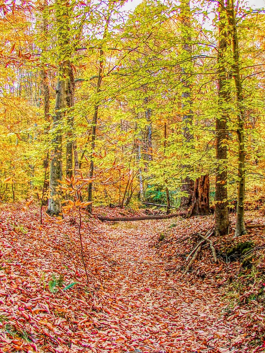 賓州雷德利克里克公園(Ridley creek park),金色的季節_圖1-10