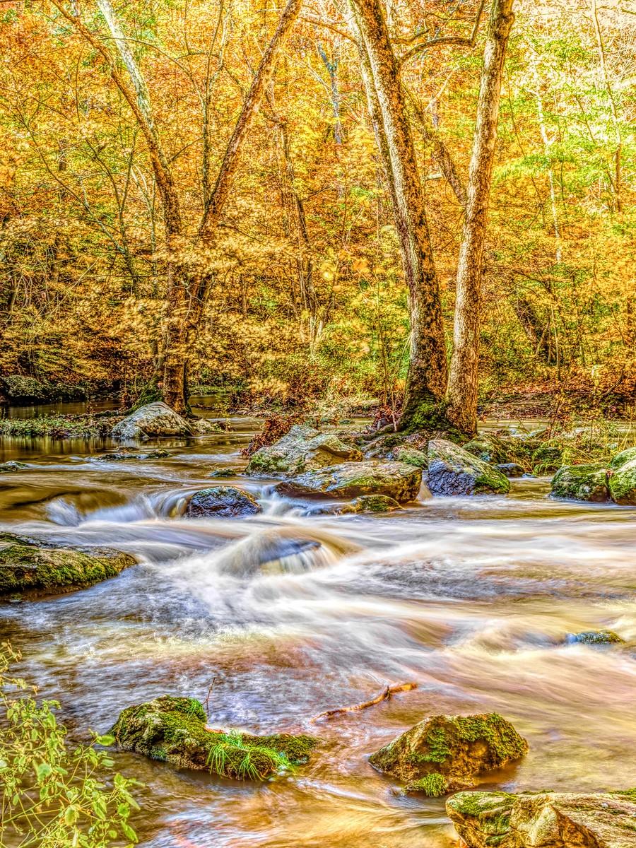 賓州雷德利克里克公園(Ridley creek park),金色的季節_圖1-11
