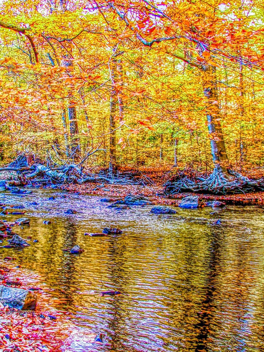 賓州雷德利克里克公園(Ridley creek park),金色的季節_圖1-12