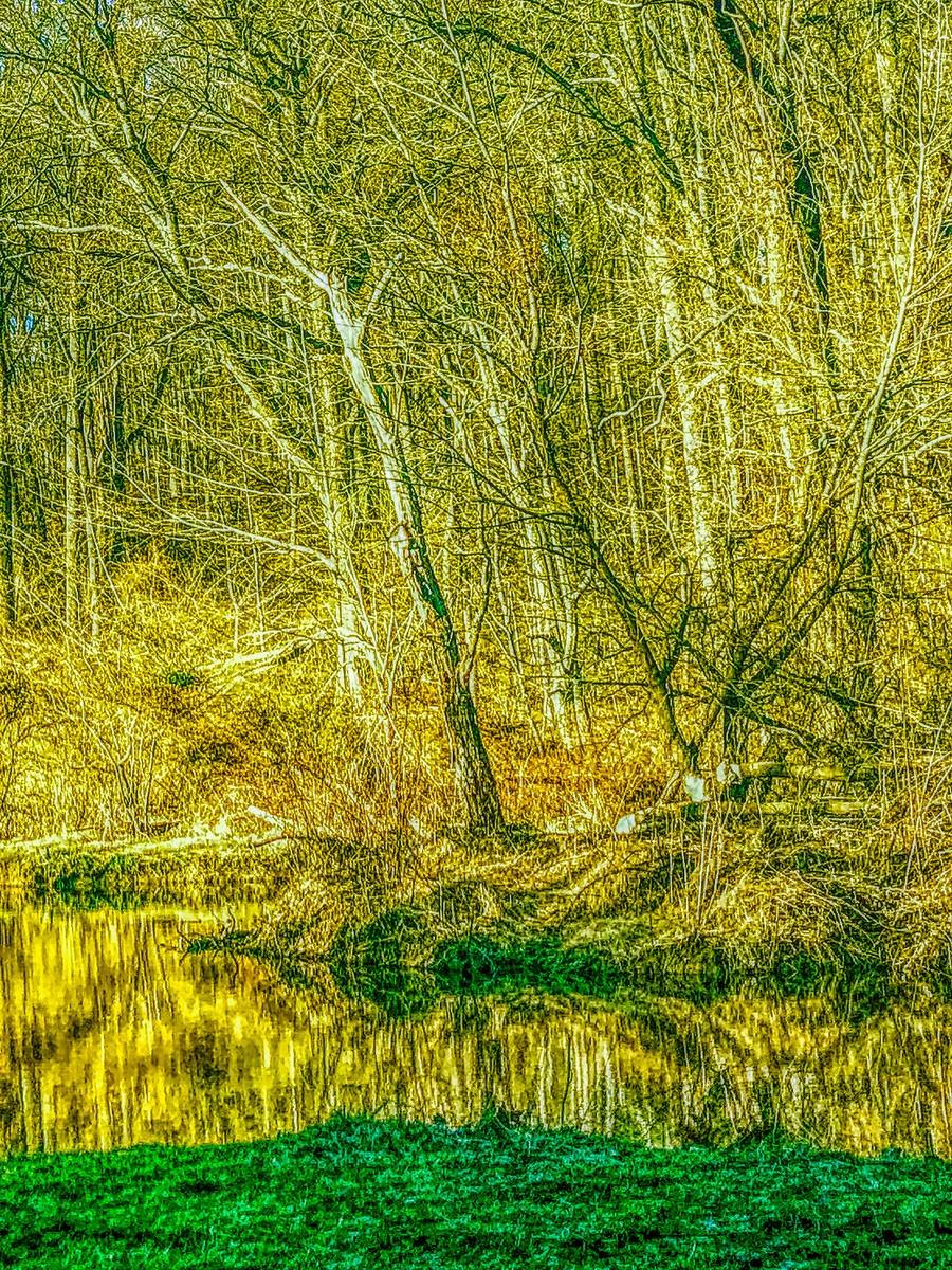 賓州雷德利克里克公園(Ridley creek park),金色的季節_圖1-7