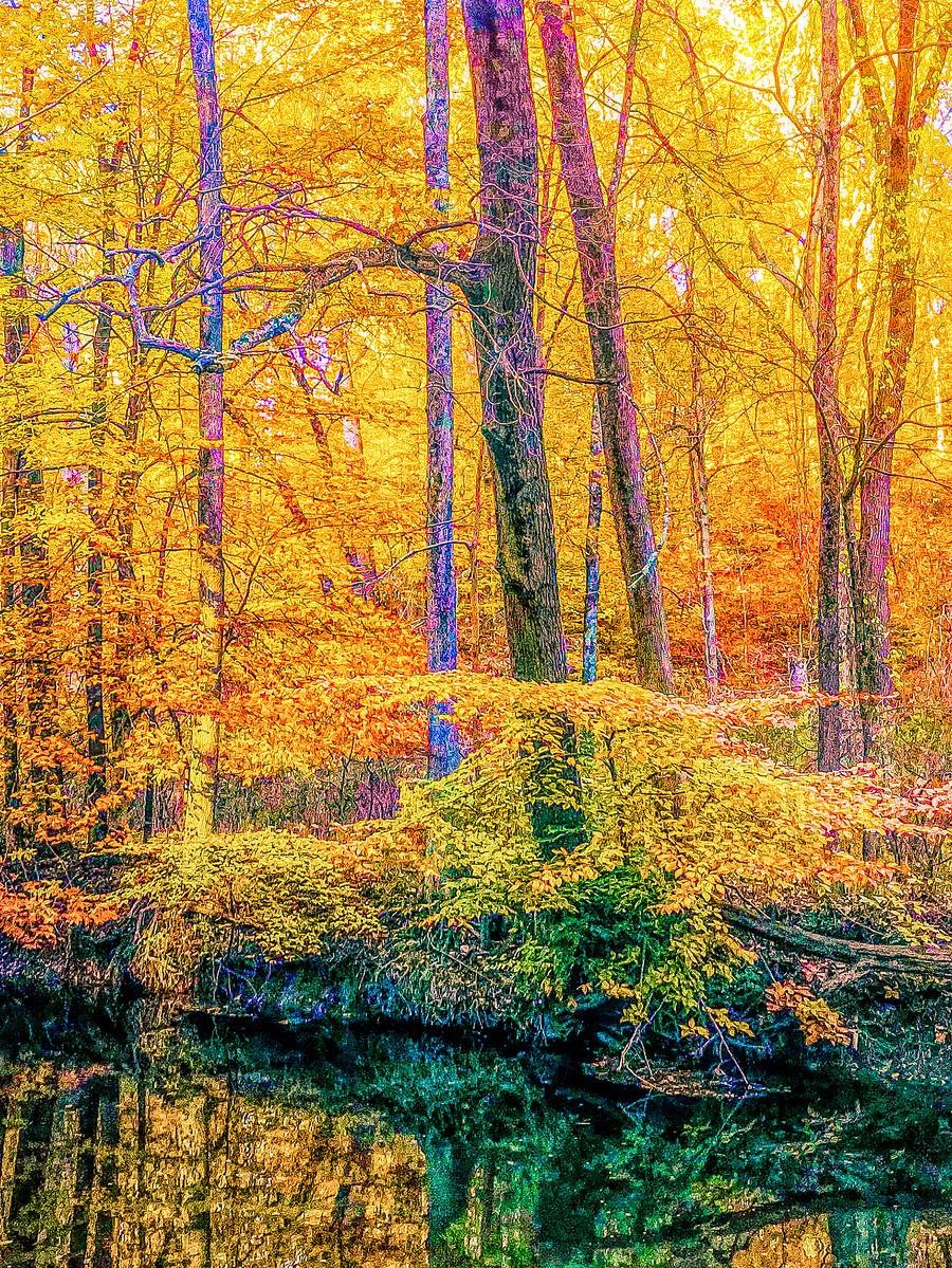 賓州雷德利克里克公園(Ridley creek park),金色的季節_圖1-6