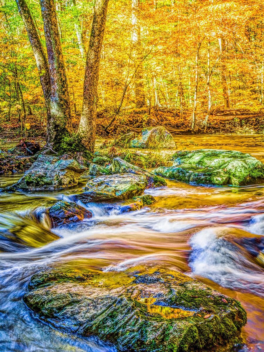 賓州雷德利克里克公園(Ridley creek park),金色的季節_圖1-5