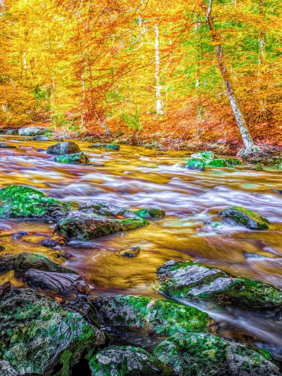 賓州雷德利克里克公園(Ridley creek park),金色的季節_圖1-1