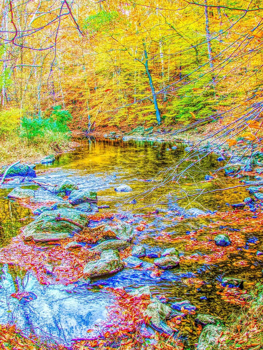 賓州雷德利克里克公園(Ridley creek park),金色的季節_圖1-3