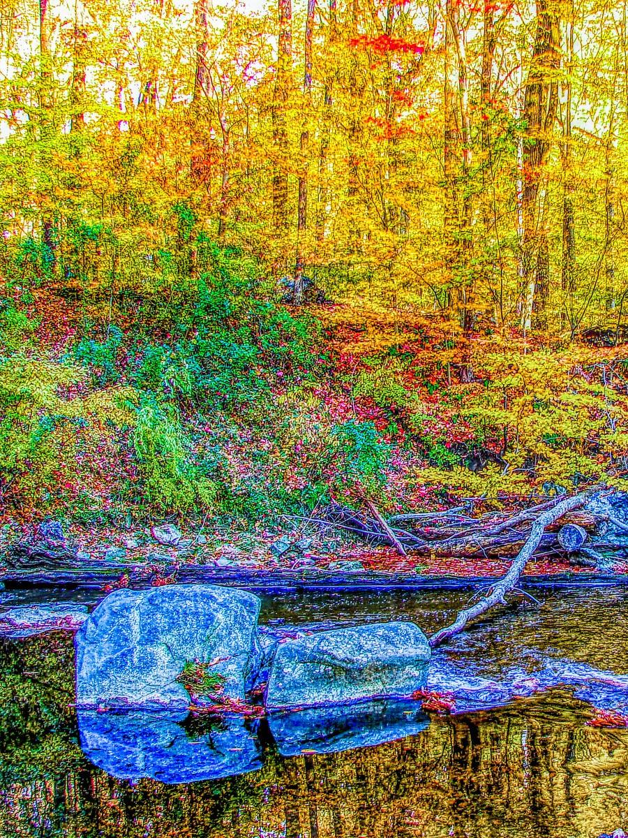 賓州雷德利克里克公園(Ridley creek park),金色的季節_圖1-4