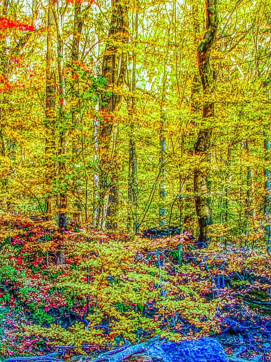 賓州雷德利克里克公園(Ridley creek park),金色的季節_圖1-21