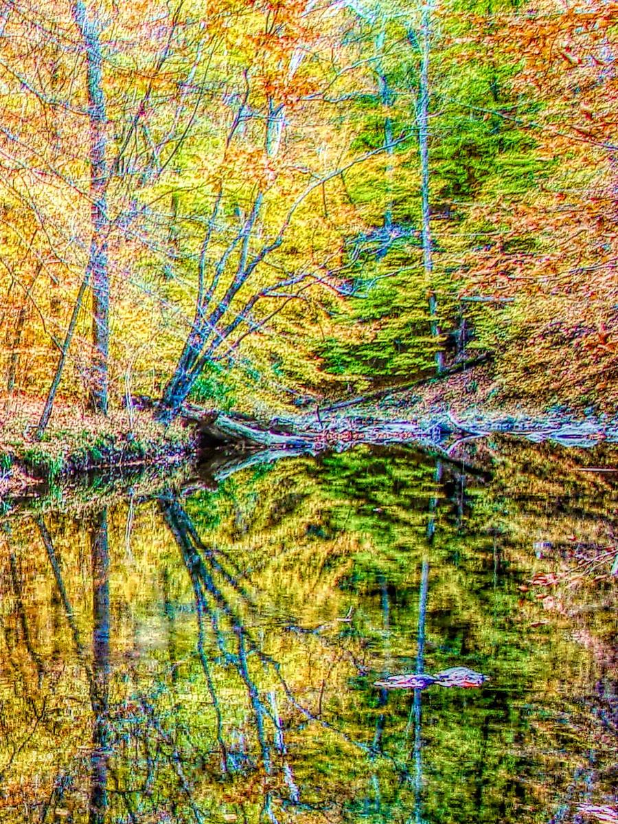 賓州雷德利克里克公園(Ridley creek park),金色的季節_圖1-22