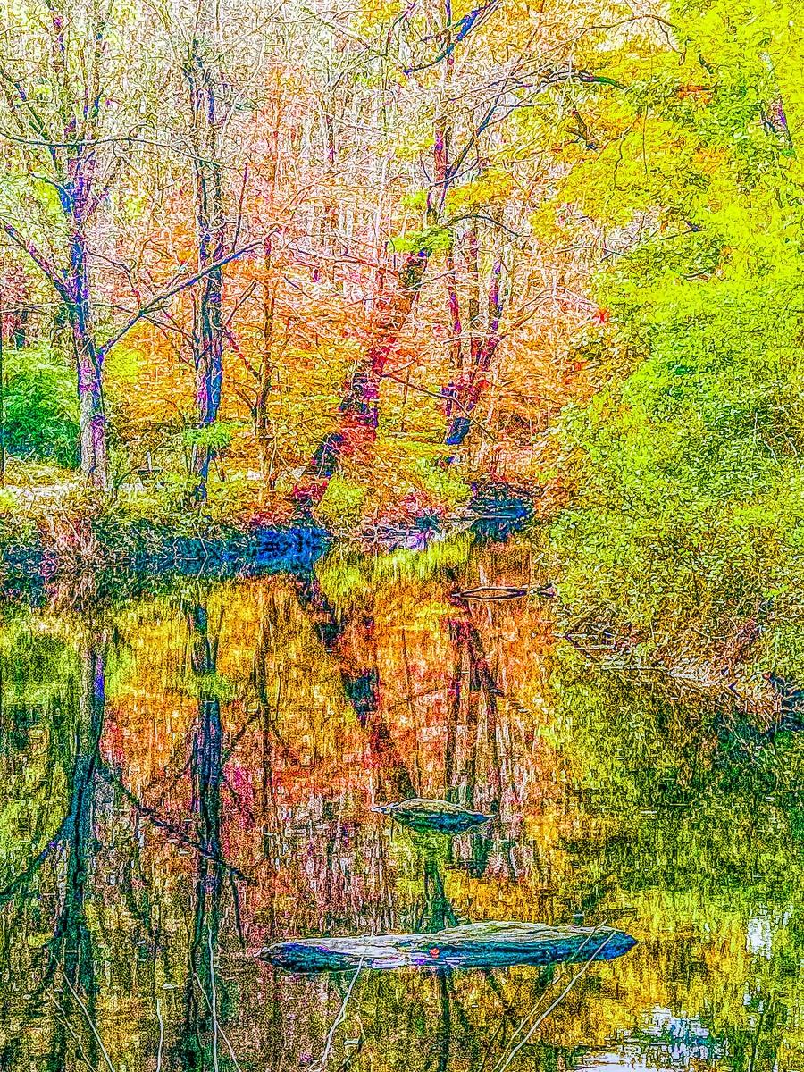 賓州雷德利克里克公園(Ridley creek park),金色的季節_圖1-23