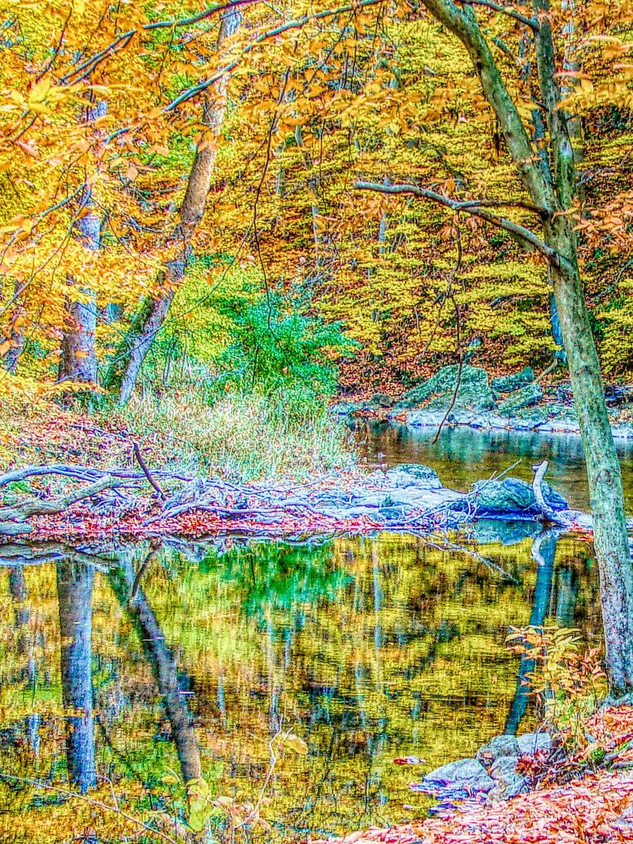 賓州雷德利克里克公園(Ridley creek park),金色的季節_圖1-24