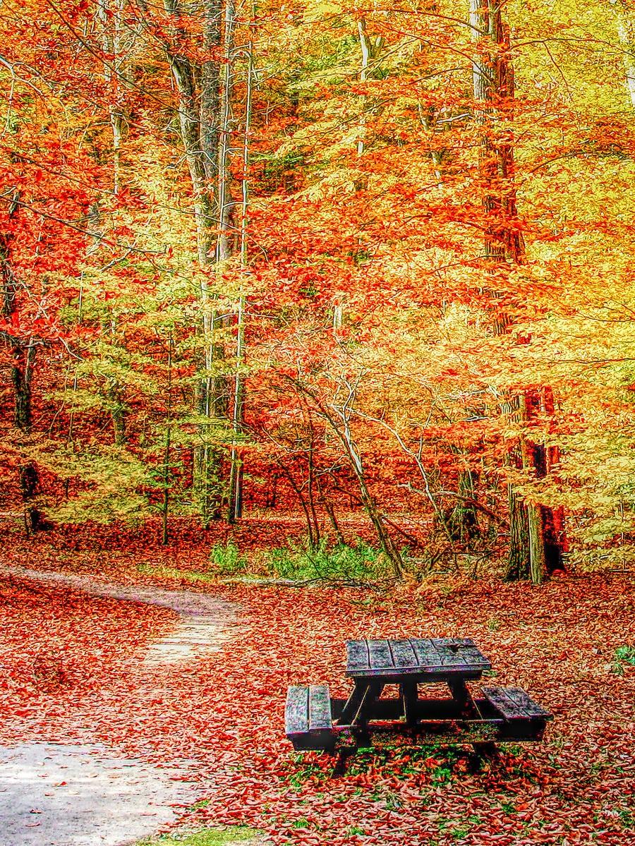 賓州雷德利克里克公園(Ridley creek park),金色的季節_圖1-28