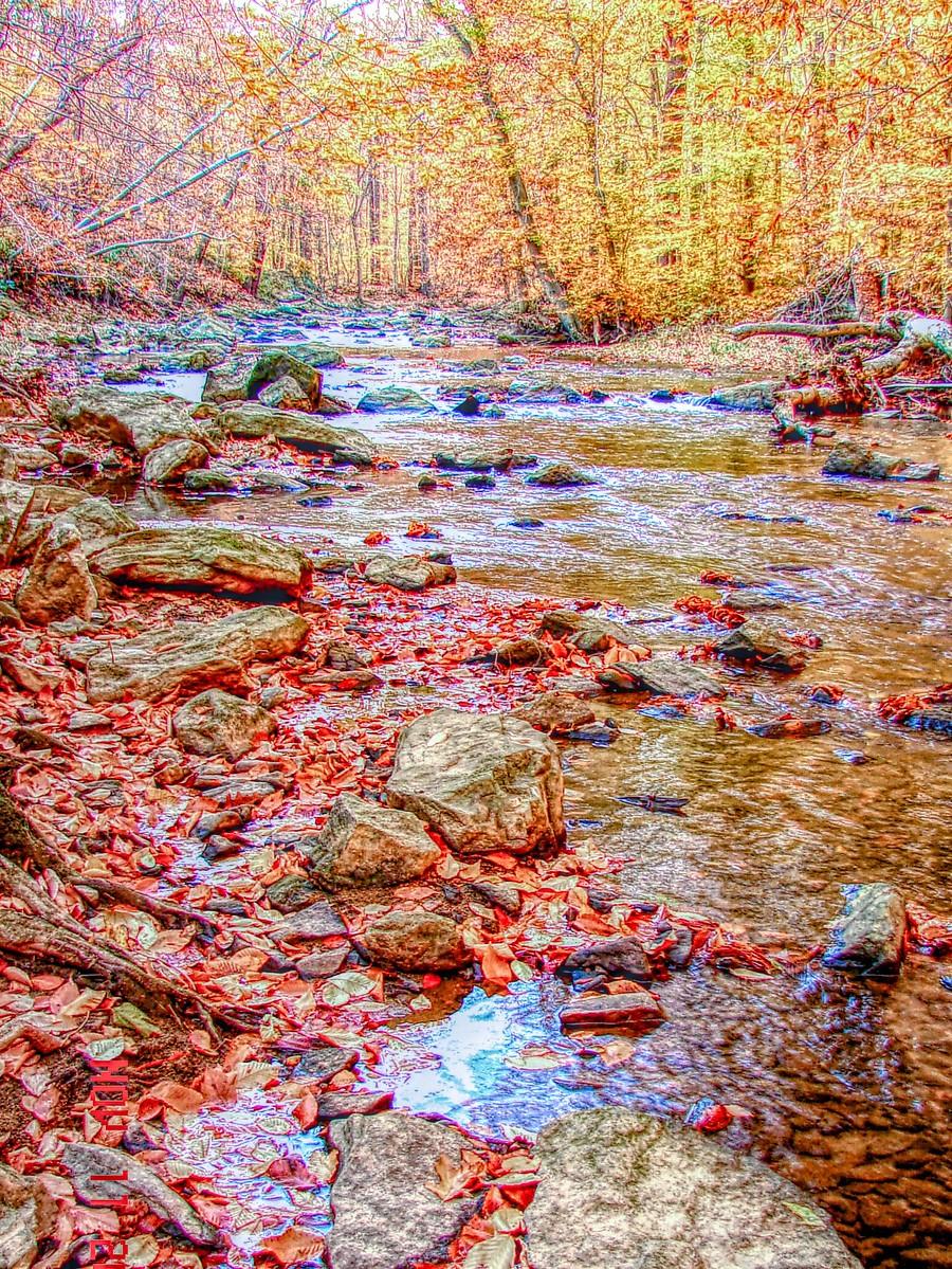 賓州雷德利克里克公園(Ridley creek park),金色的季節_圖1-27