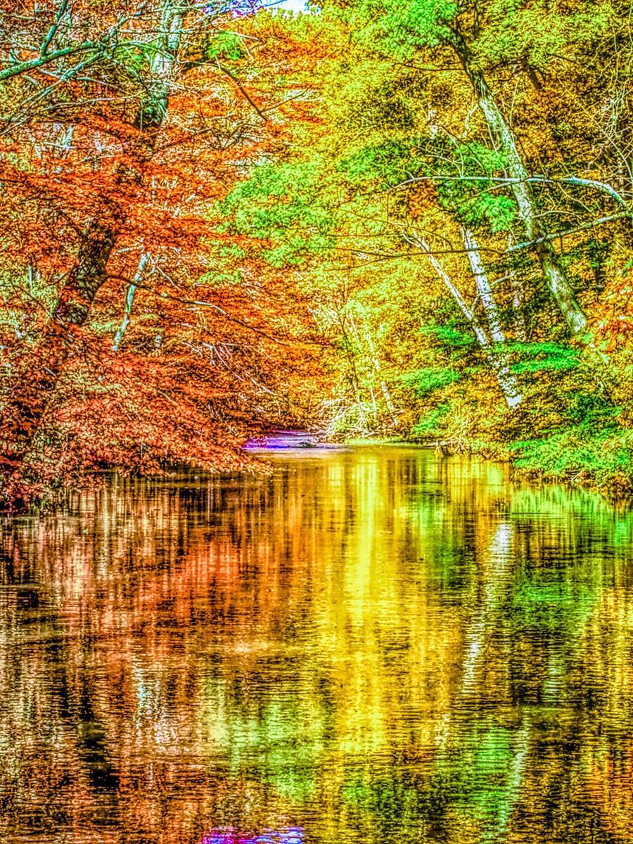 賓州雷德利克里克公園(Ridley creek park),金色的季節_圖1-26