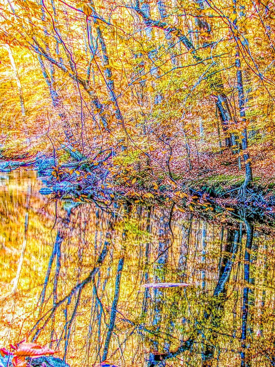 賓州雷德利克里克公園(Ridley creek park),金色的季節_圖1-25