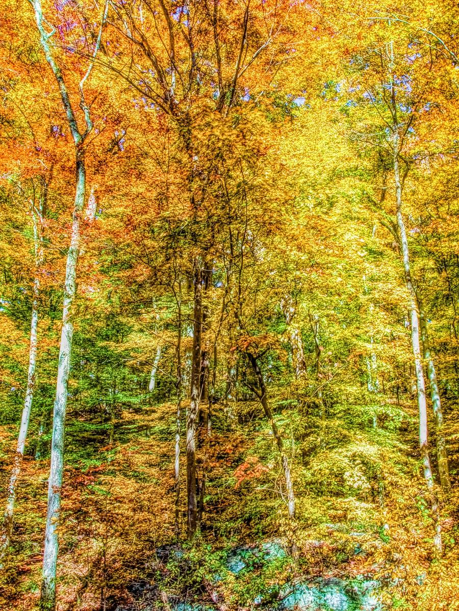 賓州雷德利克里克公園(Ridley creek park),金色的季節_圖1-29