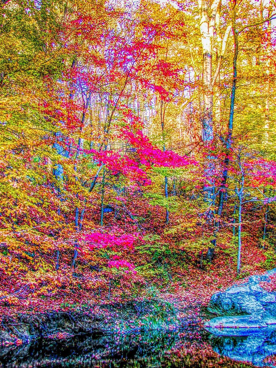 賓州雷德利克里克公園(Ridley creek park),金色的季節_圖1-30