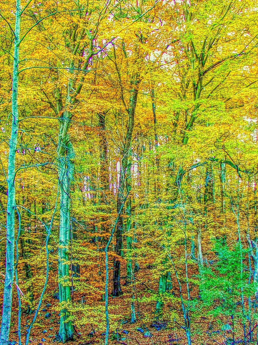 賓州雷德利克里克公園(Ridley creek park),金色的季節_圖1-31