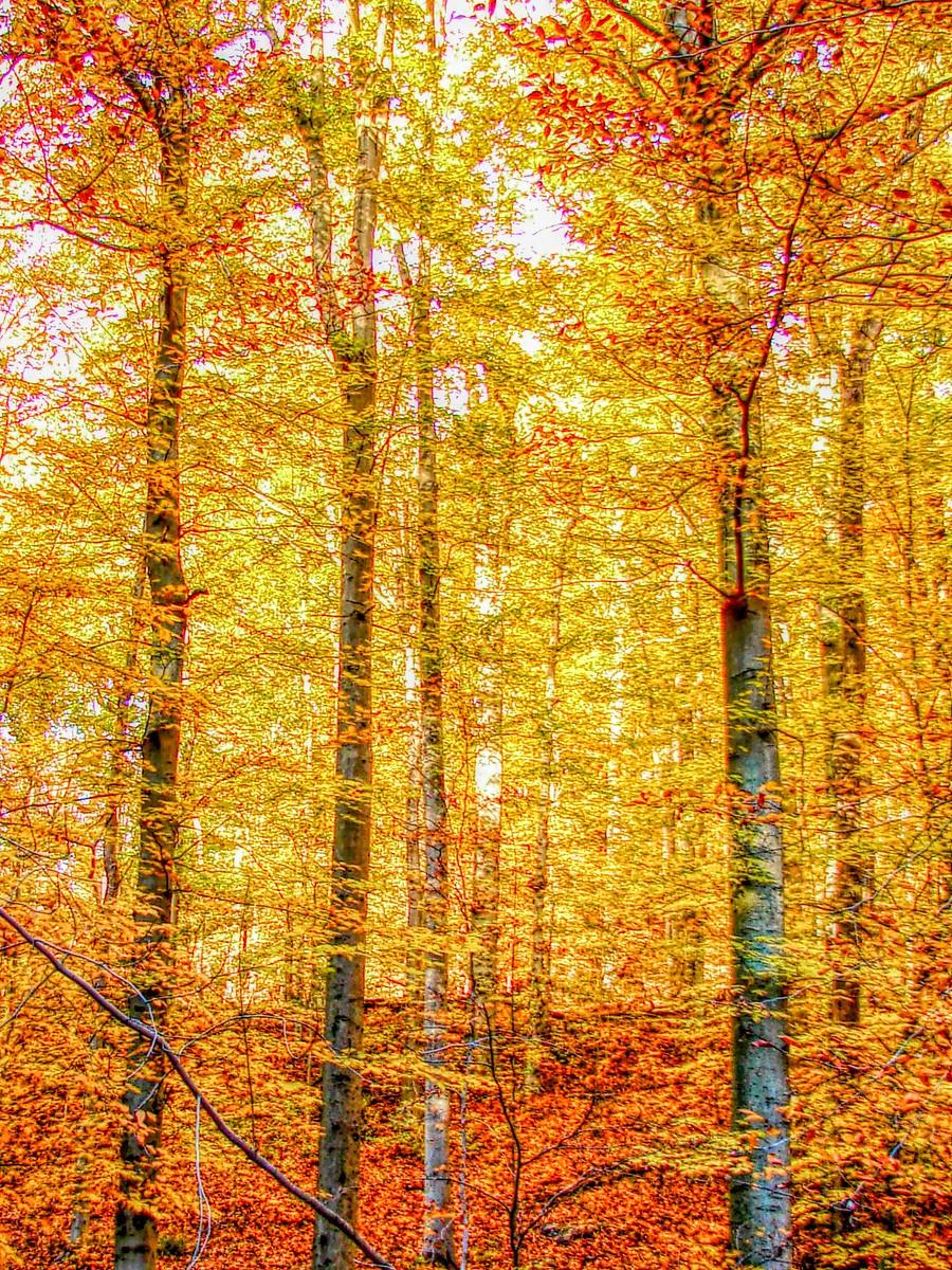 賓州雷德利克里克公園(Ridley creek park),金色的季節_圖1-32
