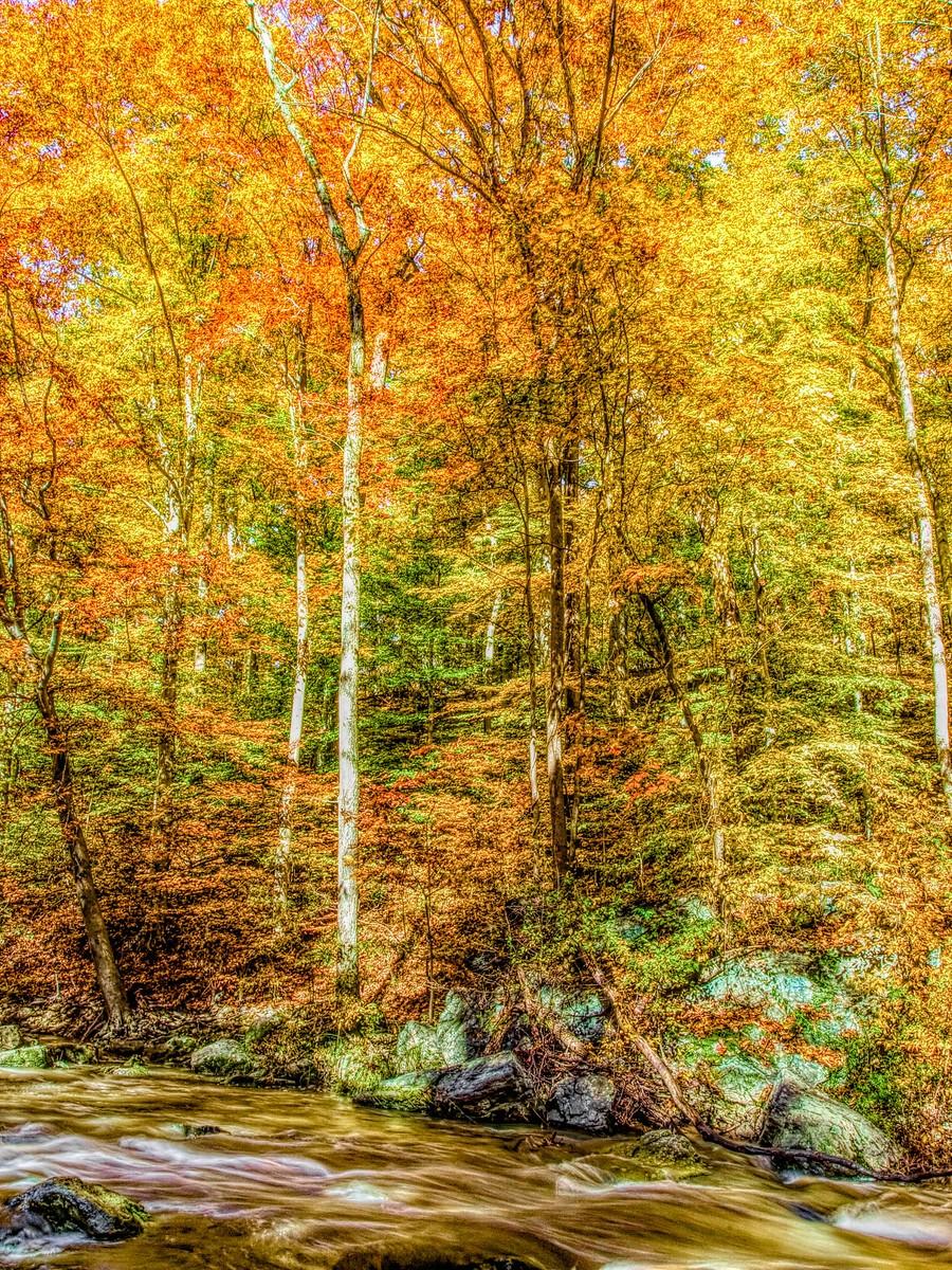 賓州雷德利克里克公園(Ridley creek park),金色的季節_圖1-33
