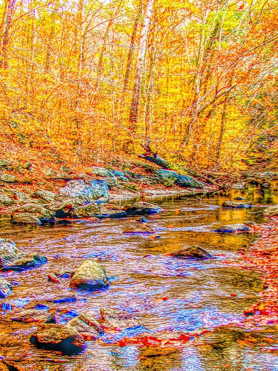 賓州雷德利克里克公園(Ridley creek park),金色的季節_圖1-34