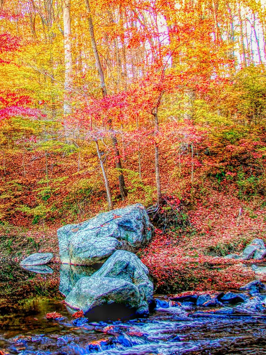 賓州雷德利克里克公園(Ridley creek park),金色的季節_圖1-36