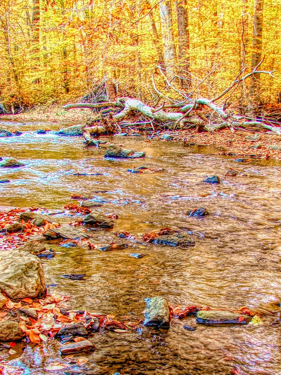 賓州雷德利克里克公園(Ridley creek park),金色的季節_圖1-40