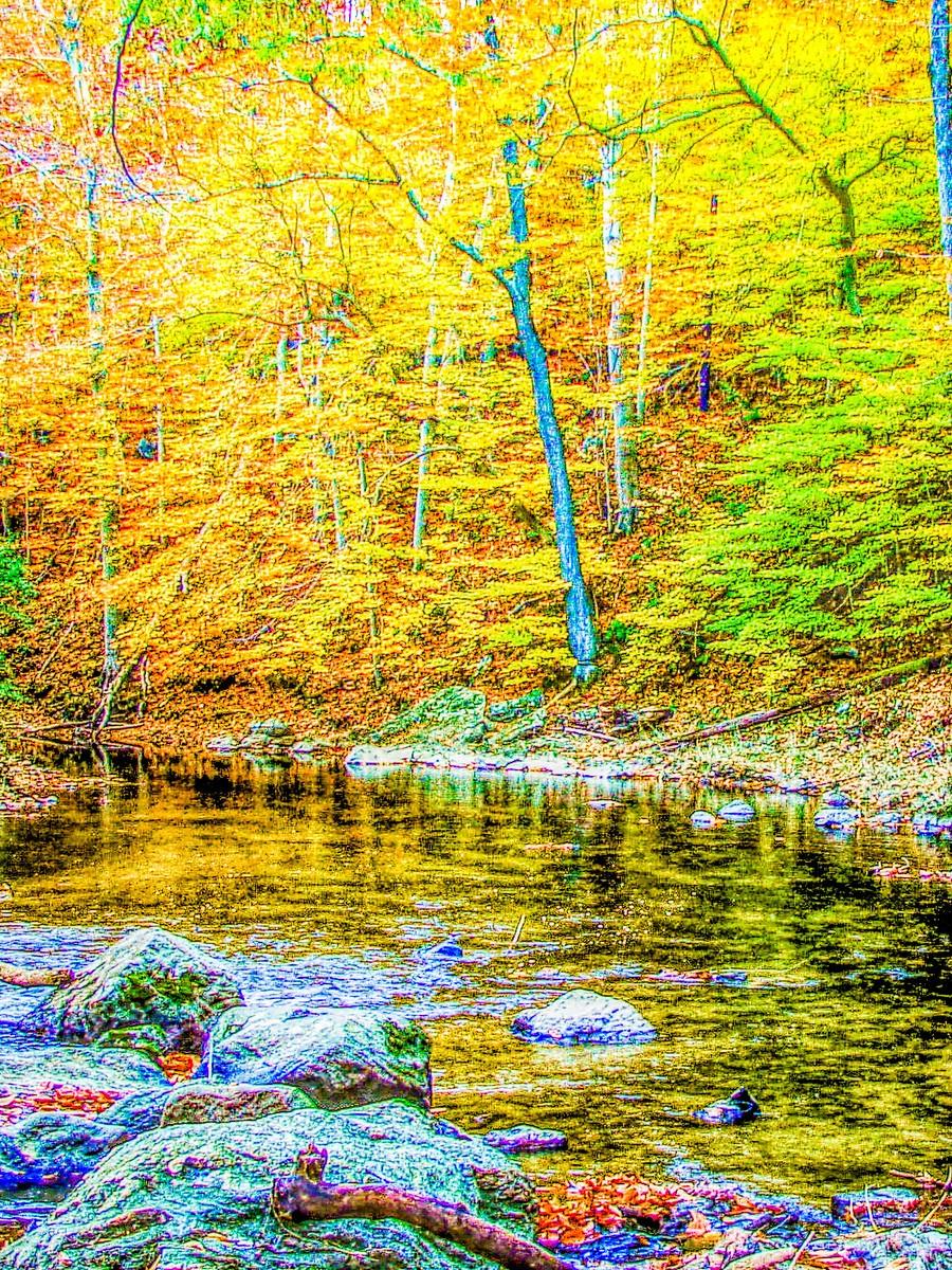 賓州雷德利克里克公園(Ridley creek park),金色的季節_圖1-39