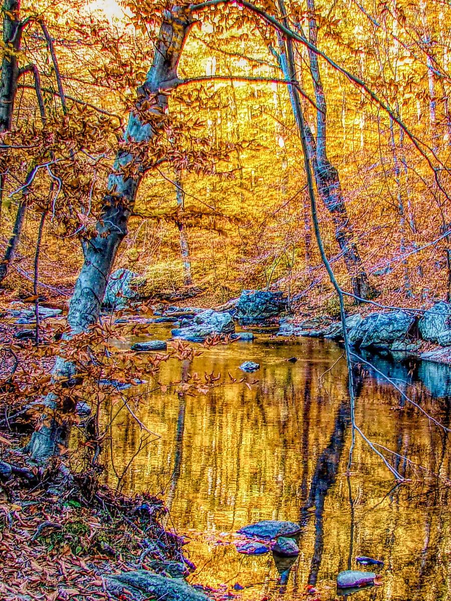 賓州雷德利克里克公園(Ridley creek park),金色的季節_圖1-38