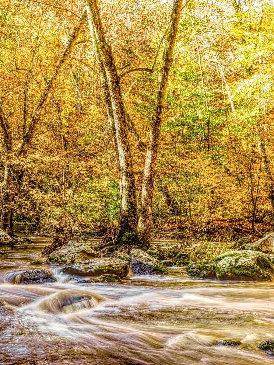 賓州雷德利克里克公園(Ridley creek park),金色的季節_圖1-37