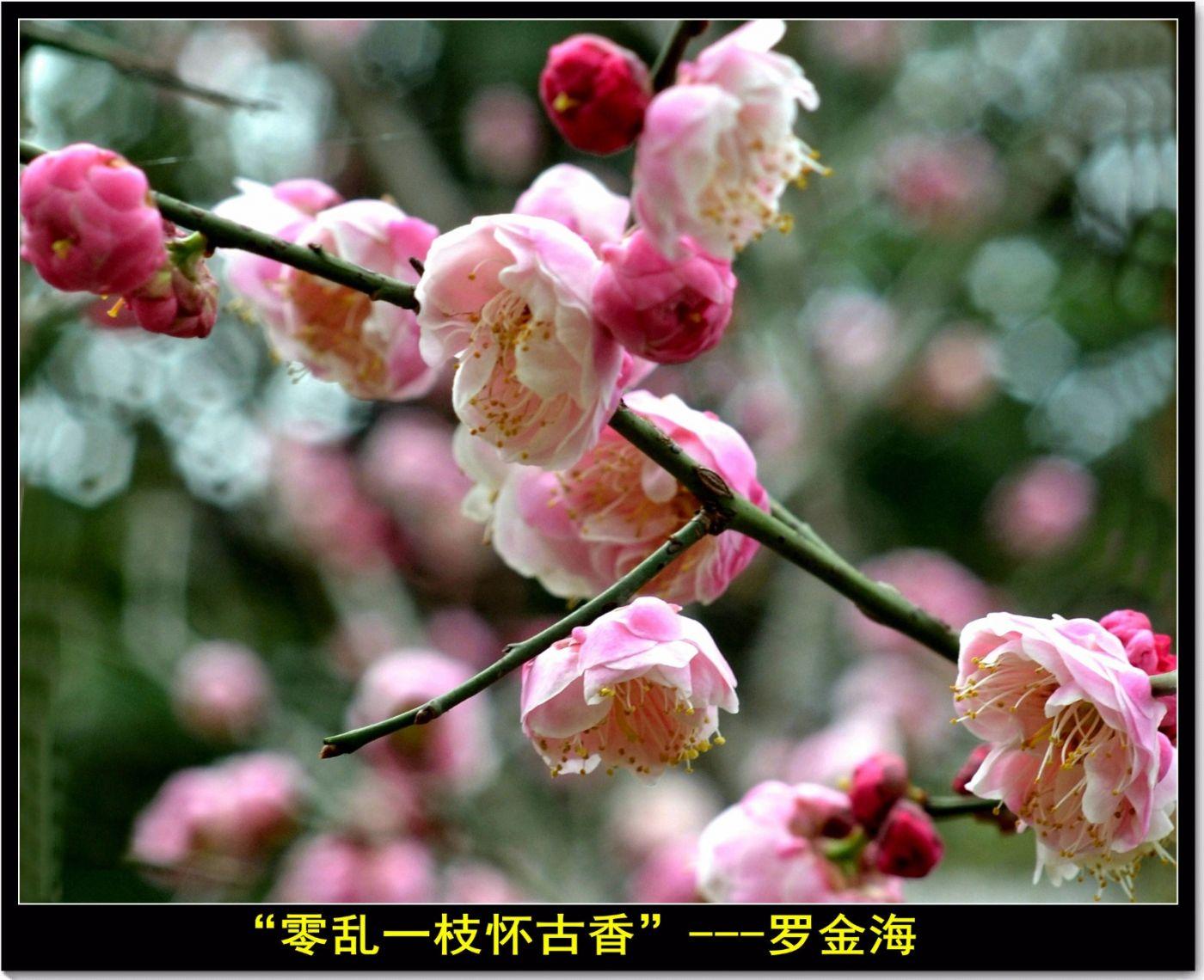 咏梅(七律三首)_图1-8