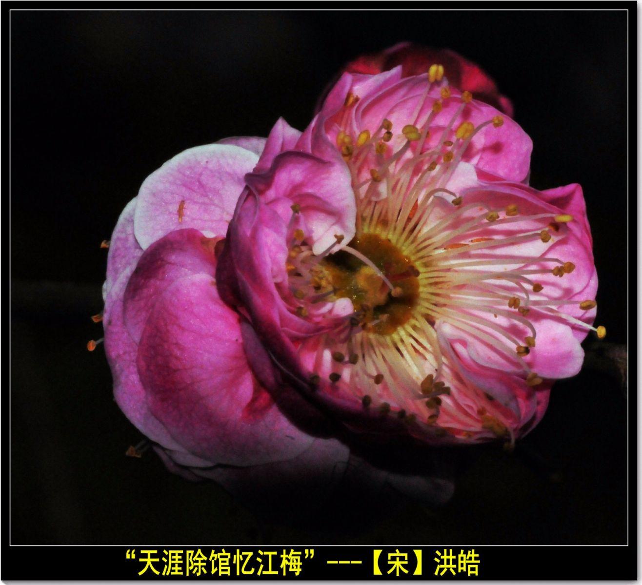 咏梅(七律三首)_图1-11
