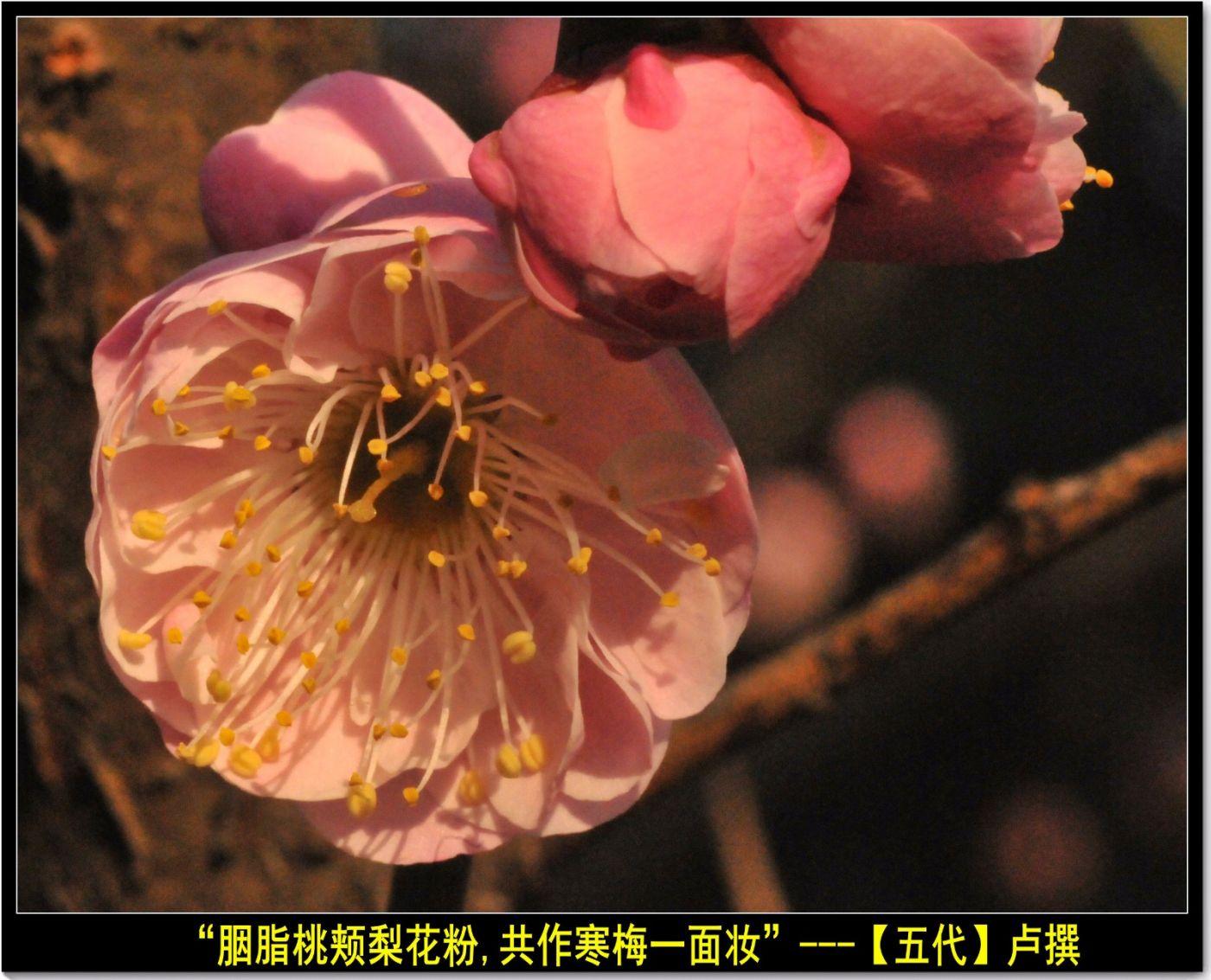 咏梅(七律三首)_图1-3